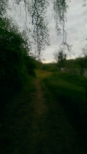 Pathway Green Green Green!  Spring River Trail Ide Adobe State Park Nature_collection Sacramento River