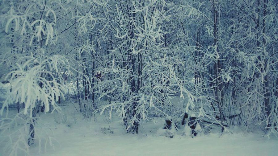 Esperando meu lobo... Hello World ❤