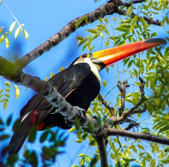 Toucan Bird Low