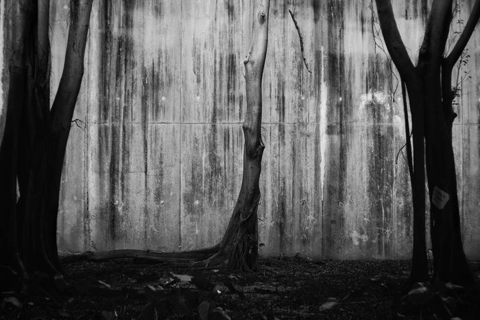 the roots Blackandwhite Black And White Bnw Black Wallpaper Art Zisunword Root Roots Wood Mood Feel Lonely Tree Curtain Tree Trunk Full Frame Close-up Drapes  Room Textured  Backgrounds Plant Bark Tree Ring