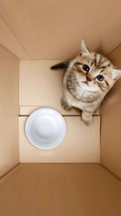 Enjoying Life _CatsAPassion?