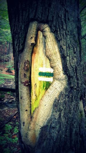 Green Color Male Karpaty Nature Road Sign Tourist Information Tree Wood Wood - Material