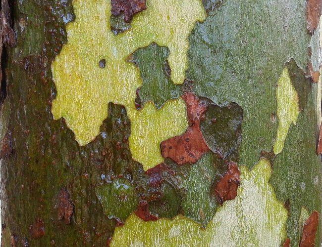 Full frame shot of green tree