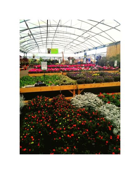 Flower Day No People Outdoors Nature Comercial Retail  For Sale Lots Of Flowers Freshness Garden Center Greenhouse Plant Retail  Growth Fragility Nature Growing Garden Retail