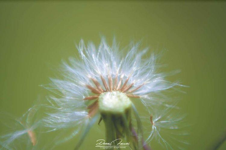 Deffx Nature