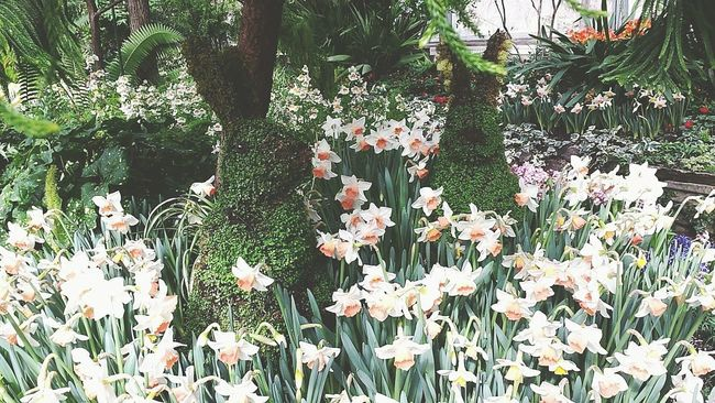 Vintage Style Garden Photography Rabbits Green Flowers Daffodils Summertime Cute