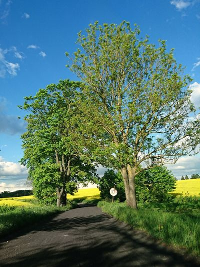 Tree Day Nature Outdoors Green Color No People Beauty In Nature Blue Sunlight Growth Scenics Sky Landscape Road Rural Scene Rural Road Poland Plant Polska Warmia
