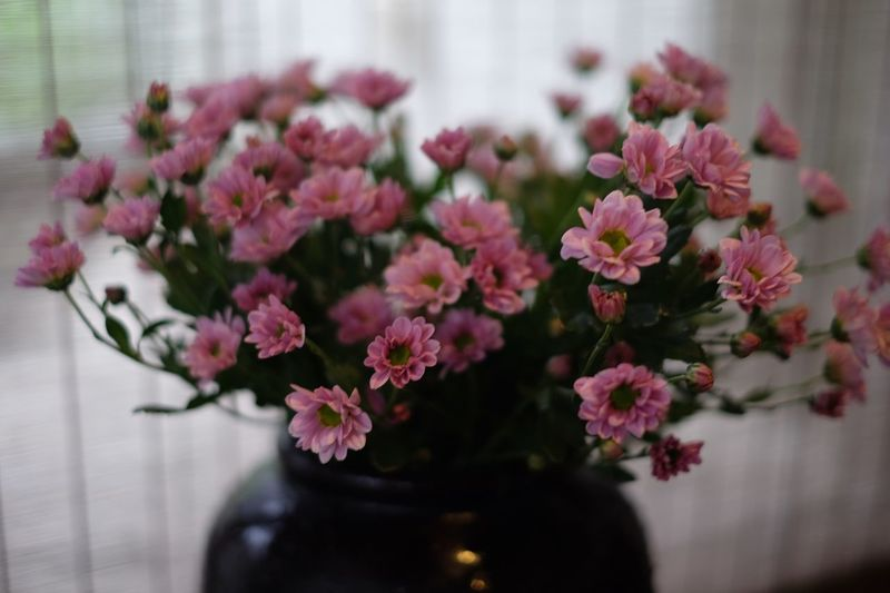 Flowering Plant Flower Freshness Plant Beauty In Nature Vulnerability  Fragility Pink Color Selective Focus No People Focus On Foreground Vase Inflorescence Petal Indoors  Flower Arrangement Flower Head Close-up Nature Table