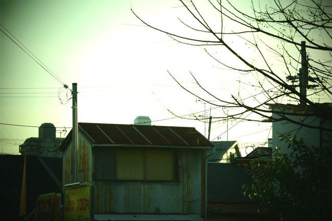 生きる 日々 Life Force House Building Exterior Built Structure Tree Morning