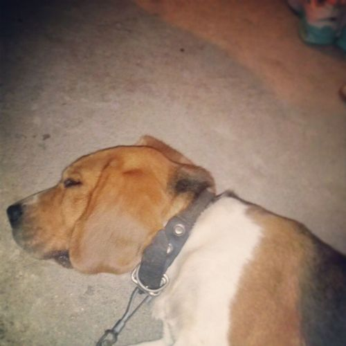 Sleep Dog Lovepet Lovedog lol instamatic instagood 021 011 rjsp instamatic goodlife goodvibe riodejaneiro google foco força fé entaotoma entaovai instalover Boris 7