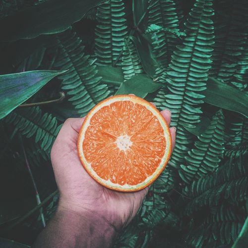High angle view of hand holding orange