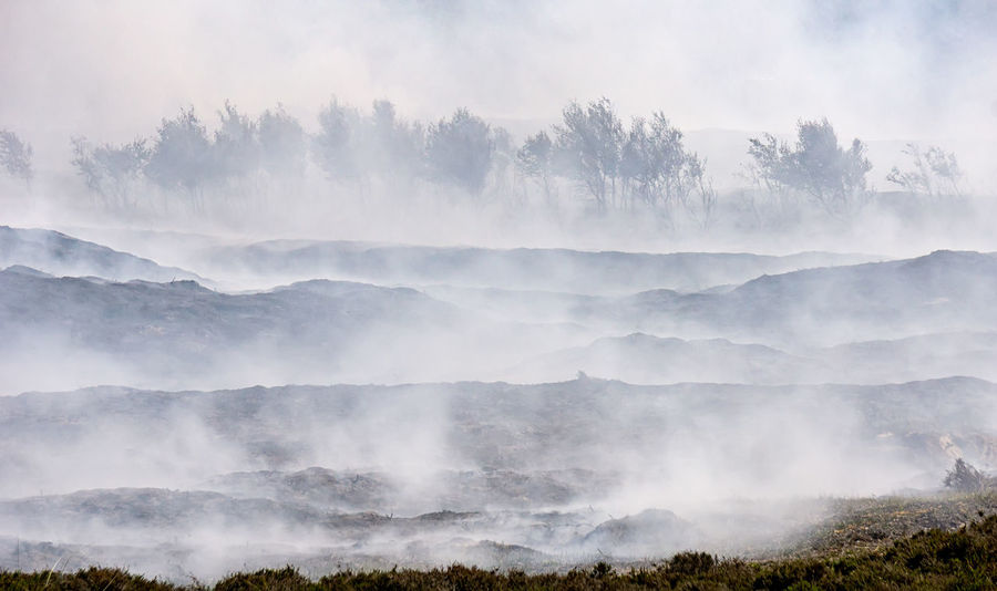 Smoldering heather fields after controlled burning Burning Deutschland Morsum Cliff, Sylt Morsum-Kliff Smoke Sylt, Germany Environment Fire Heather Heather Field Heide Land Landscape Layers Of Smoke Morsum Kliff Nature No People Non-urban Scene Outdoors Smoldering Sylt