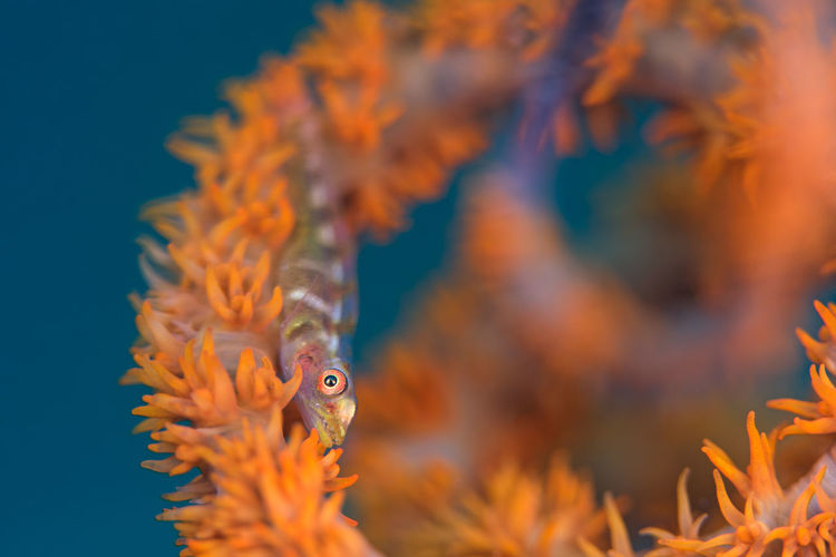 Underwater Goby Animal Themes Animal Wildlife Animals In The Wild Aquarium Beauty In Nature Blue Close-up Clown Fish Coral Day Nature No People One Animal Orange Color Outdoors Sea Sea Anemone Sea Life Swimming UnderSea Underwater Water