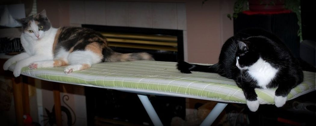 straight cats Enjoying Life Hello World