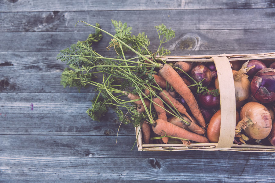Bio Urban Gardening Vegetarian Food Agricolture Carrot Food Fresh Harvest Horticulture Locavore Organic Organic Food Self-sufficient Lifestyle Self-supply Sustainability Vegetable