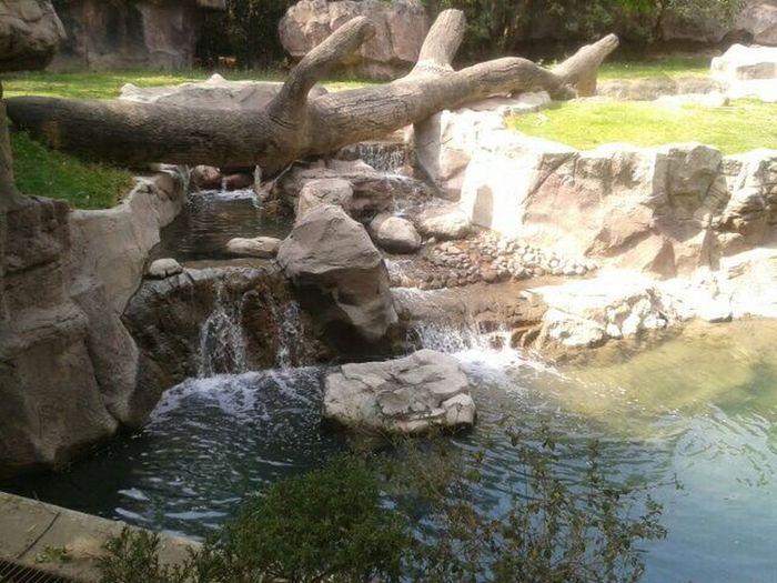 Zoológico CDMX First Eyeem Photo