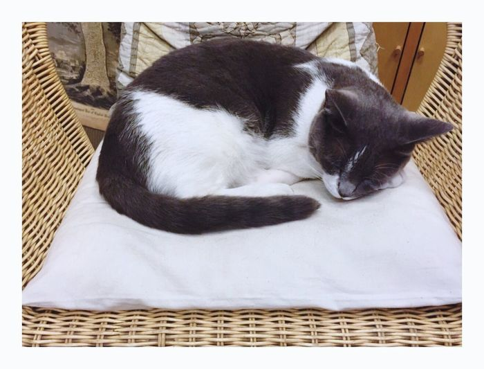 Cat Sleeping Pillow Cushion Chair Bookshop Grey White Symmetry Peace