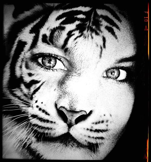 My cat loving daughter! Animal Themes Tiger Feline Portrait