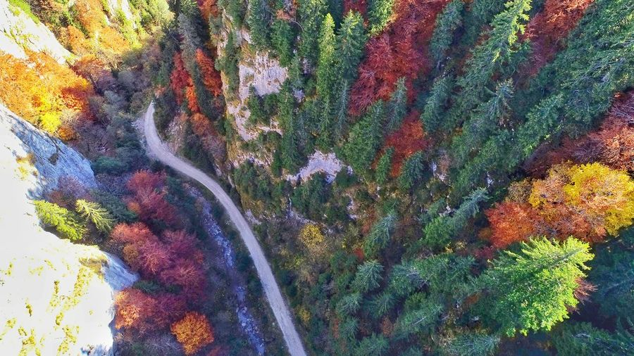 Aerial Photography Picea Abies River Aerial View Aerial Shot Forest Photography Nature Photography EyeEmNewHere EyeEm Best Shots EyeEm Selects EyeEm Nature Lover Forestphotography My Best Travel Photo Forest Trees A New Beginning Tree Multi Colored Textured  Close-up Sky