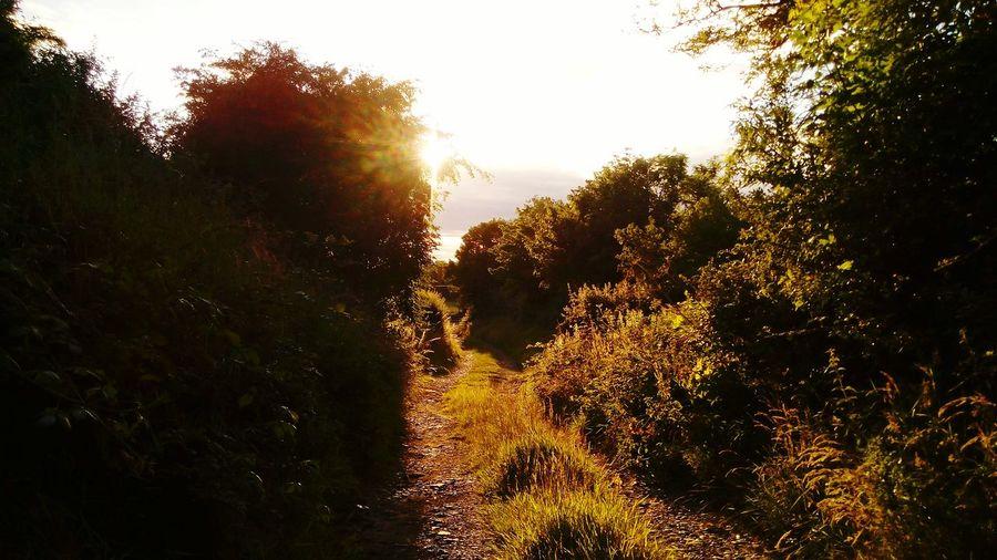 Walking Around Enjoying The Sun Escaping Evening Walk Nature On Your Doorstep Hidden Path