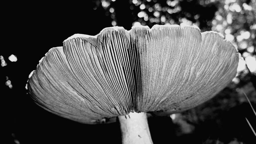 Nature Photography Nature Black & White Black And White Noir Et Blanc Mushroom Mushrooms Champignons Champignon Foret