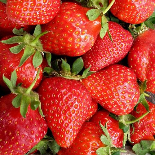 ERDBEERENZEIT!!!! Strawberries Strawberry Erdebeere Lecker Beste Sommer Rot Beere Brainstorm Eating Eatingtoomuch Yummy Summer Loveit