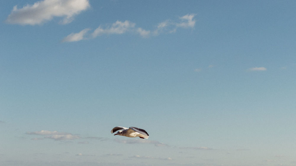 seagull in the sky Bird Birds Birds In Flight Blue Sky Bluesky Catching A Flight Clouds Clouds And Sky Cloudsandsky Flight Height Nature Seagul Seagull SEAGULL IN FLIGHT Seagulls Seagulls And Sea Seaguls Seaside Seaside Exploring Seaside Heights☀ Sky Sky And Clouds Top