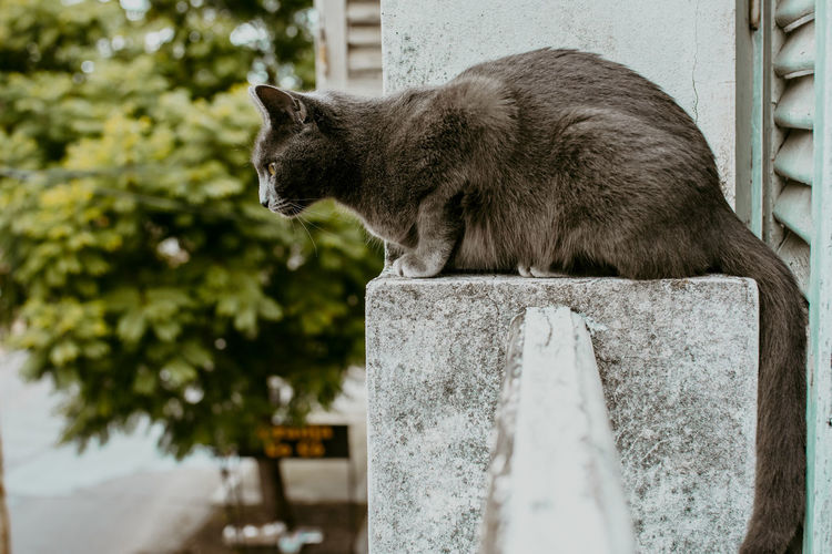 Side view of a cat