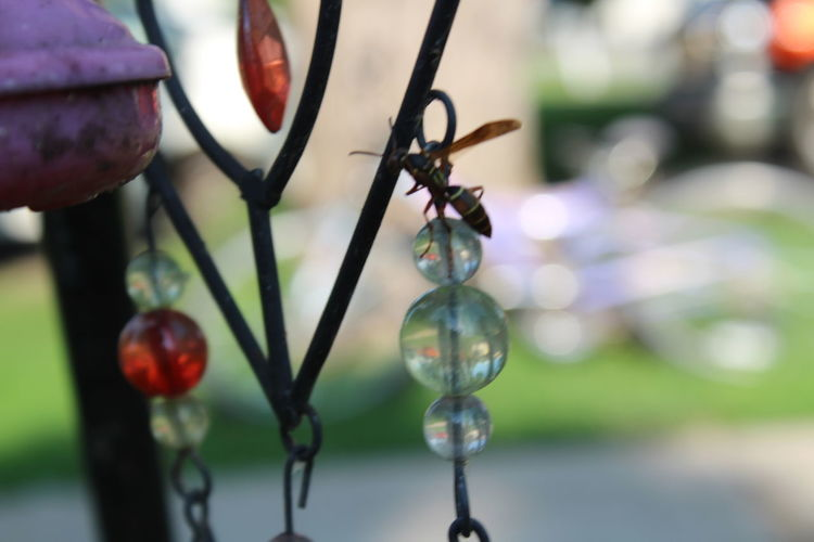 Beads Beauty In Nature Outdoors Wasp