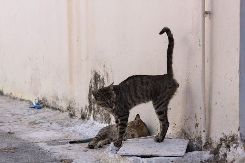 Open Edit Cats Cat Milos Greece VisitGreece Cute Cute Pets