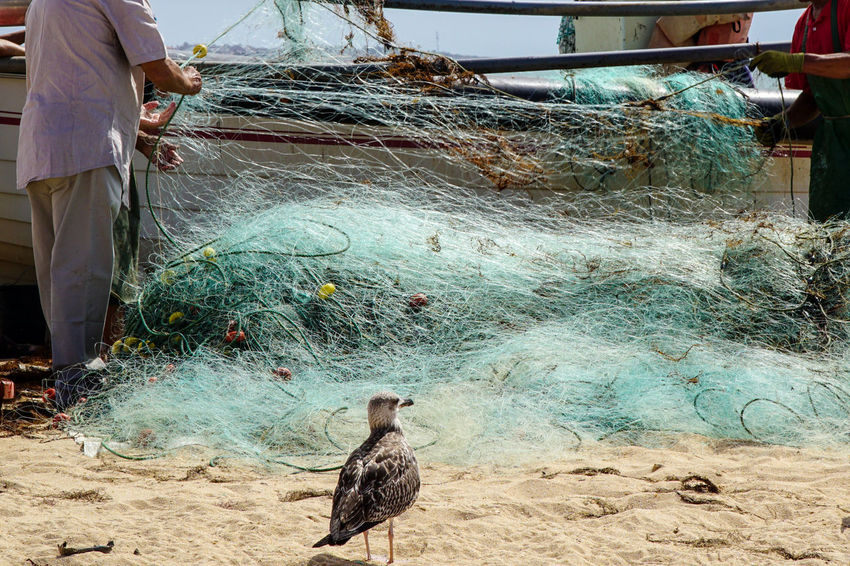 fish.erman Been There. Done That. The Week On EyeEm Animal Themes Bird Fischernetz Fisherman Fishing Net One Animal Outdoors Real People Water Eye4photography