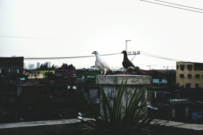 LOVE - Sky Day No People Outdoors Greenhouse Architecture EyeEm Vision EyeEm Phillipines Eyeem Philippines Doves Dove Love Let's Go. Together. Pet Portraits