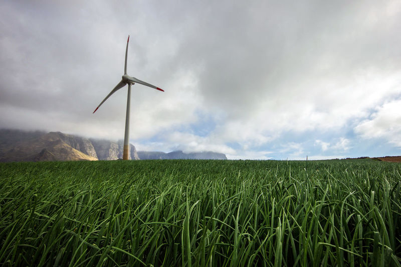 Agriculture Canary Islands Gran Canaria Growth Gáldar Islas Canarias Renovable Agriculture Alternative Energy Energy Industry Environment Environmental Conservation Farm Field Land Landscape Nature Onion Plant Renewable Energy Rural Scene Sky Turbine Wind Power Wind Turbine