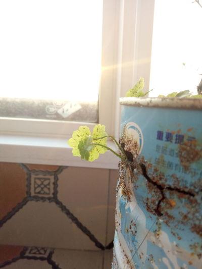 Life Plant