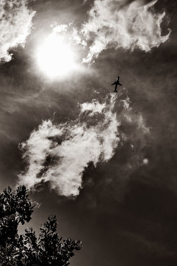 Out of the Fire! Air Vehicle Airplane Beauty In Nature Cloud - Sky Day Fire Flying Low Angle View Mid-air Mode Of Transportation Nature No People Outdoors Plant Silhouette Sky Sun Sunlight Tranquility Transportation Tree A New Beginning