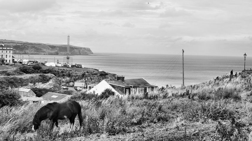 Animal Themes Sea Architecture Mammal Water Sky House Nature Outdoors Day Non-urban Scene Animal Cloudy B&w Whitby Young Animal Grassy Horse Photography  Horse Grass Clouds And Sky Live For The Story