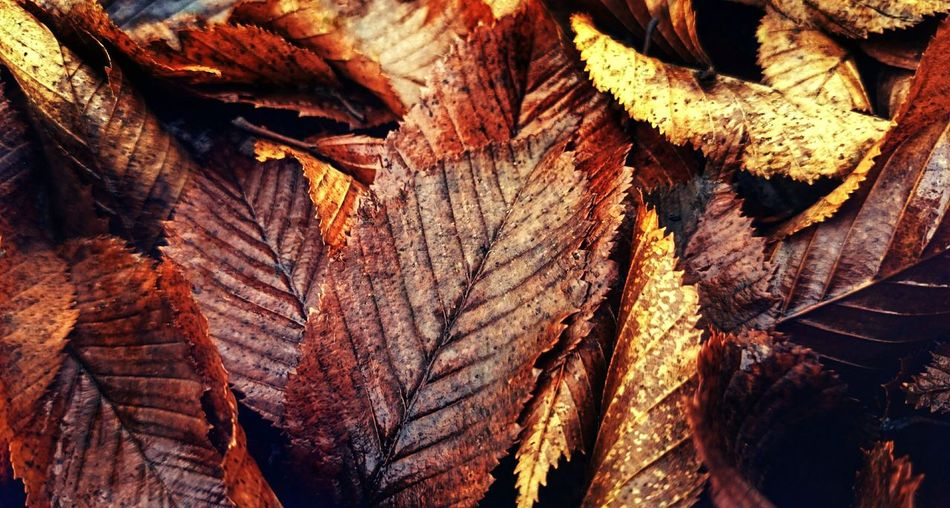 Full Frame Backgrounds Close-up No People Textured  Nature Day Outdoors Leaves Autumn Hdr Edit