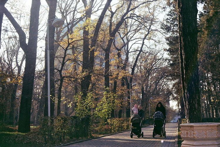 #Walk #alone #autumn #fall #film #kazakhstan #mother #panfilov #park