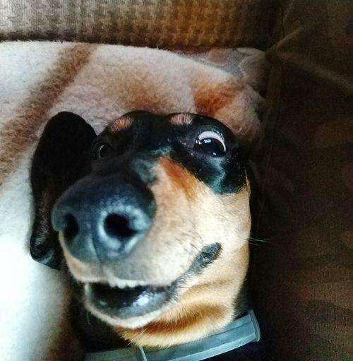 Dog Pets First Eyeem Photo