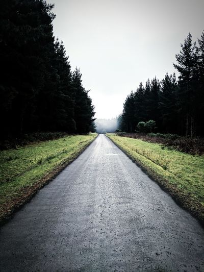 Forage The Way Forward Diminishing Perspective Tree Road Outdoors Nature No People Sky Day Grass Beauty In Nature