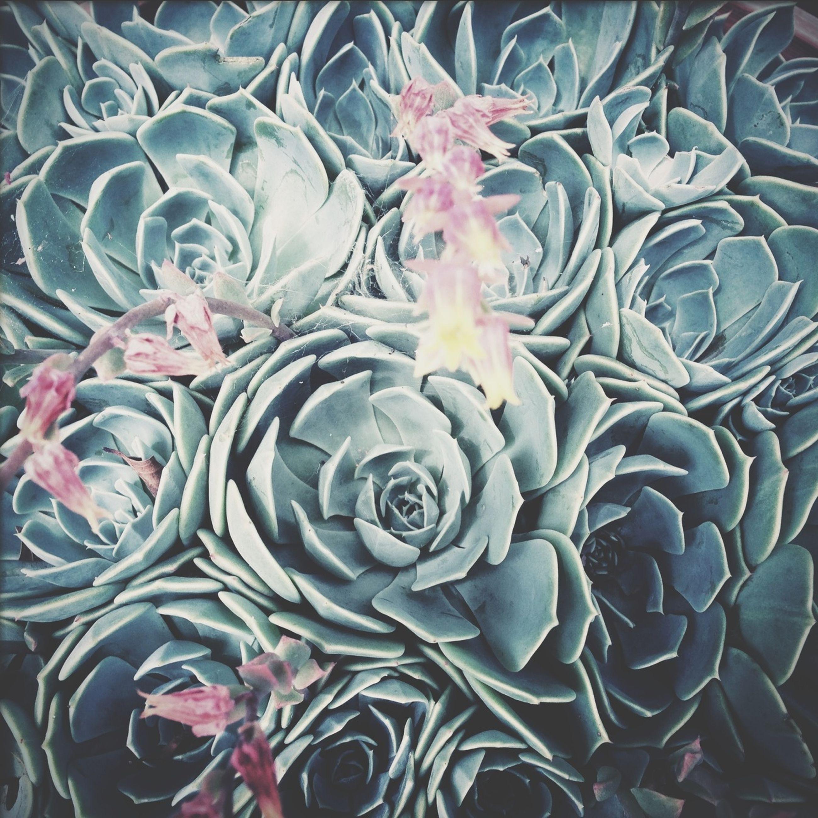 flower, full frame, indoors, backgrounds, decoration, fragility, pattern, multi colored, petal, design, pink color, freshness, variation, no people, rose - flower, plant, close-up, art and craft, nature, art