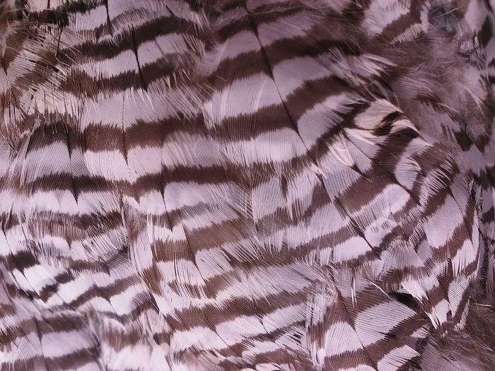 Feathers Bird Buzzard  Close-up Pattern Stripes Pattern Maximum Closeness