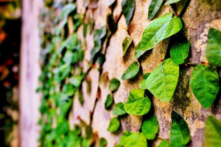 Leaf Tree Trunk