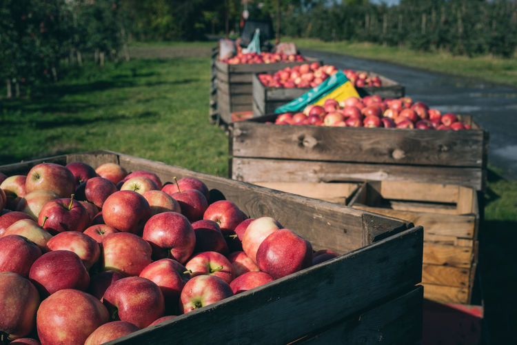 freshly harvested red apples in wooden boxes | daylight photography Harvest Season Apple Apple - Fruit Apples Box Box - Container Container Crate Daylight Photography Focus On Foreground Food Freshness Fruit Harvest Healthy Eating Large Group Of Objects No People Organic Red Wood - Material