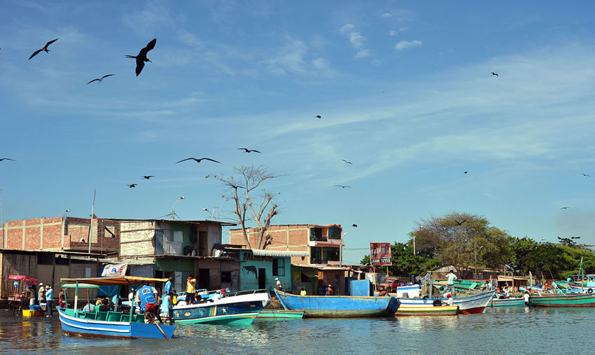 Bird Blue Sky Boats Colored Boats Northern Peru Peru Puerto Pizarro Sea Bird Sky South America Südamerika Tumbes