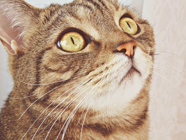 кот няша котэ прелесть пупсик усы шерсть глаза  Cat Eyes Happy