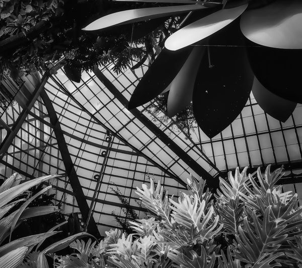 Bnw_friday_eyeemchallenge Black & White Reflection Greenhouse Sky Pond Water Reflections Plant Indoors  Growth Nature Close-up Textures And Surfaces Summer The Week On EyeEm Taking Photos Relaxing Idyllic Tranquil Scene Walking Around