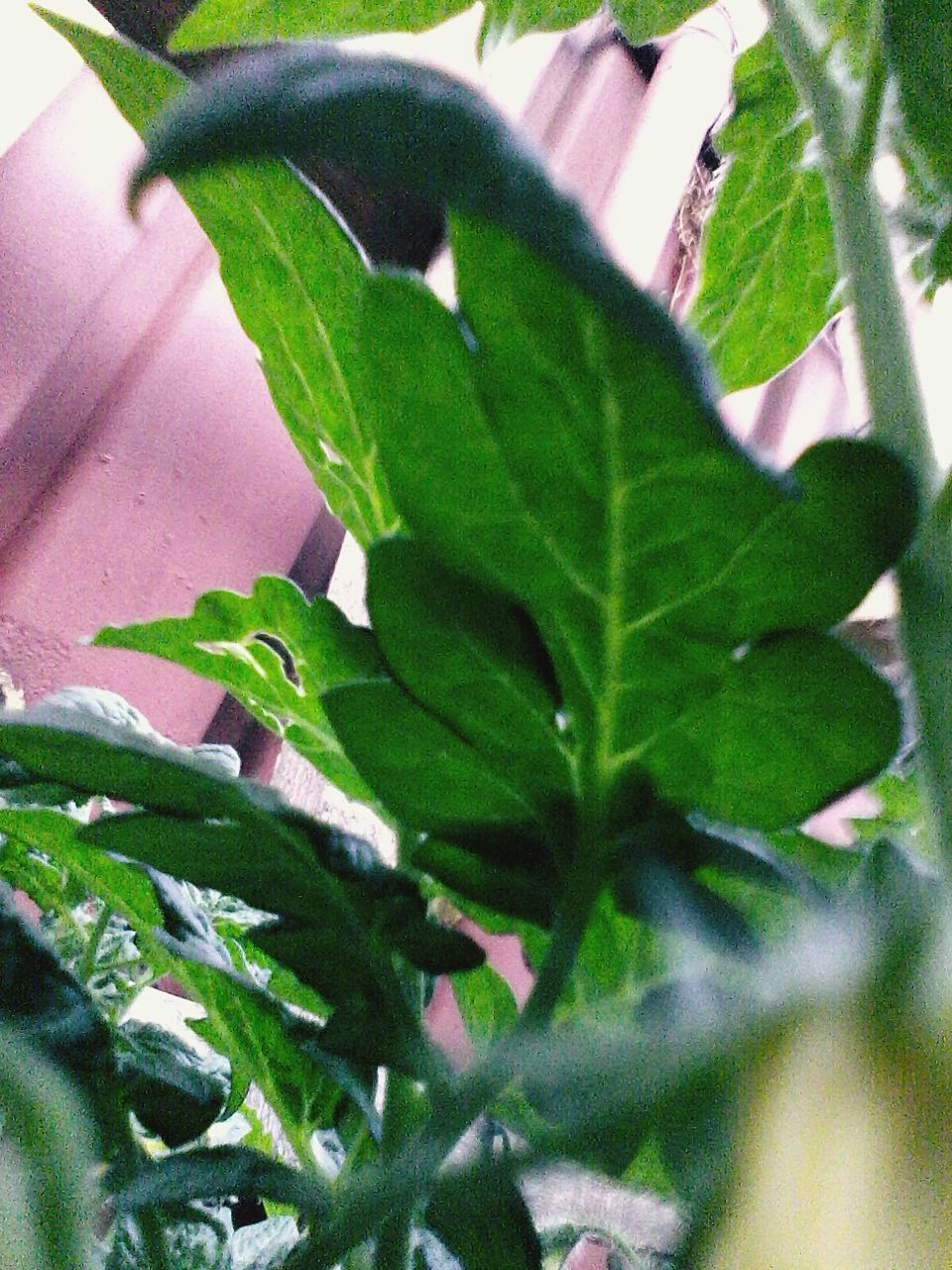 leaf, plant, growth, green color, close-up, no people, day, nature, outdoors, freshness, animal themes