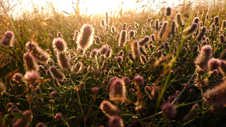 trawa Grass