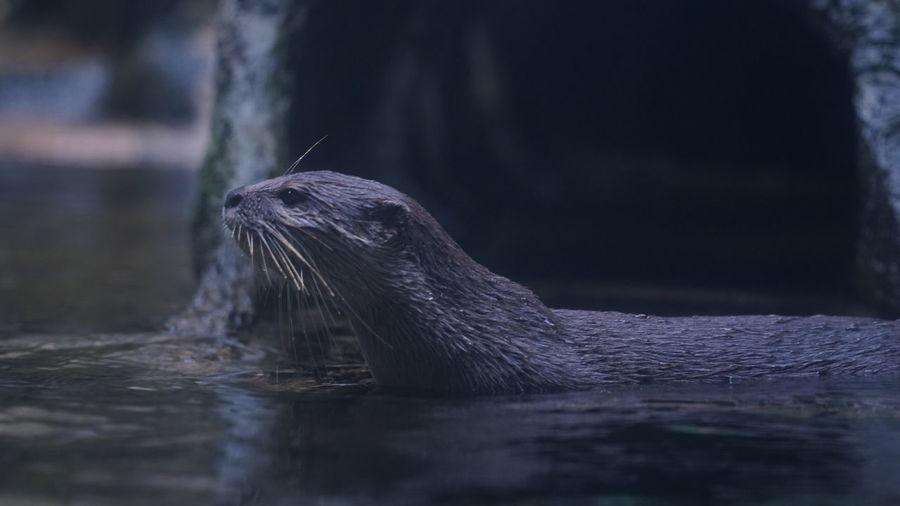Take a close look at the aquatic life